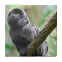 Adorable Goeldi Monkey Ceramic Tile