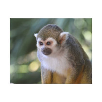Amazing Squirrel Monkey Canvas Print
