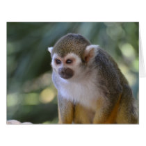 Amazing Squirrel Monkey Card