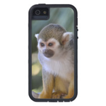 Amazing Squirrel Monkey Case For iPhone SE/5/5s