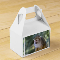 Amazing Squirrel Monkey Favor Box