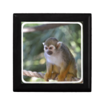 Amazing Squirrel Monkey Gift Box