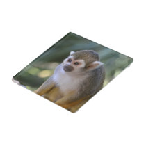 Amazing Squirrel Monkey Glass Coaster