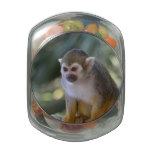 Amazing Squirrel Monkey Glass Jar