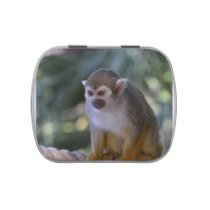 Amazing Squirrel Monkey Jelly Belly Candy Tins