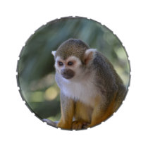 Amazing Squirrel Monkey Jelly Belly Tin