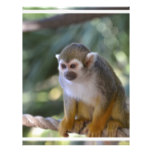 Amazing Squirrel Monkey Letterhead