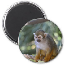 Amazing Squirrel Monkey Magnet