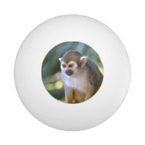 Amazing Squirrel Monkey Ping Pong Ball