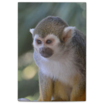 Amazing Squirrel Monkey Post-it Notes