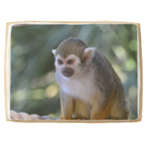 Amazing Squirrel Monkey Shortbread Cookie