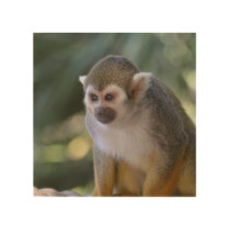 Amazing Squirrel Monkey Wood Wall Decor