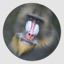 Baboon Face Sticker