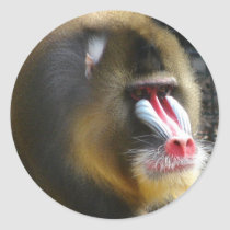 Baboon Sticker