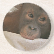 Baby Chimp Coasters