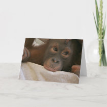 Baby Chimp Greeting Card