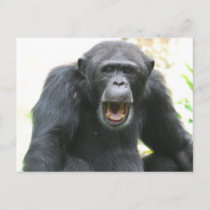Chatty Chimp Postcard