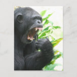 Chimp Fangs Postcard