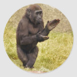 Chimpanzee Sticker