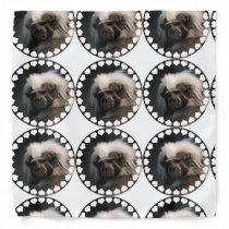 Cute Cotton Topped Tamarin Bandana