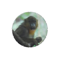 Cute Mandrill Jelly Belly Candy Tin