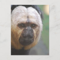 Cute Saki Monkey Postcard