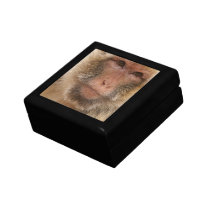 Macaque  Gift Box