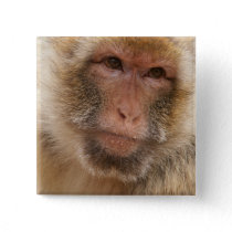 Monkey Face Square Pin