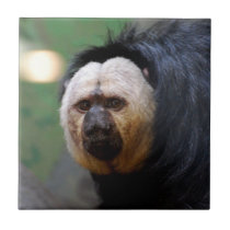 Pale Faced Saki Monkey Ceramic Tile