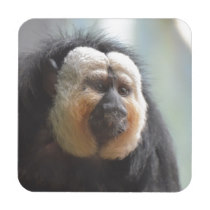 Saki Monkey Drink Coaster