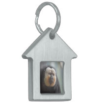 Saki Monkey Pet ID Tag