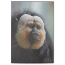 Saki Monkey Post-it Notes