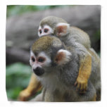Squirrel Monkey Bandana