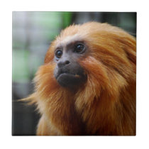 Tamarin Monkey Ceramic Tile