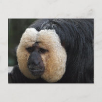 White Faced Saki Monkey Postcard