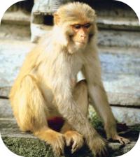 Monkeys - Learn All Ab...